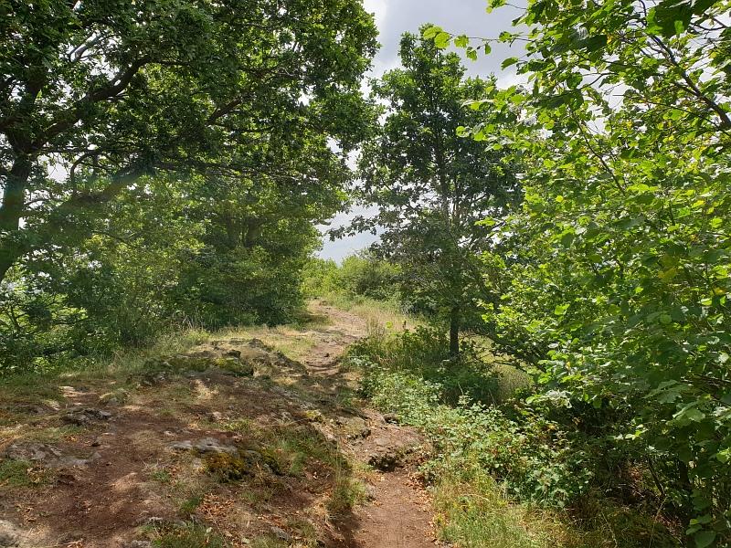 Abstieg vom Bellberg